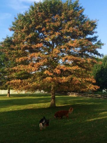 Autum at LZ-Grace